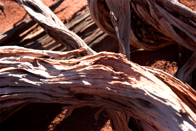 white rim canyonlands