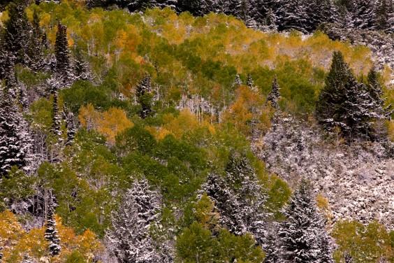 winter fall colors