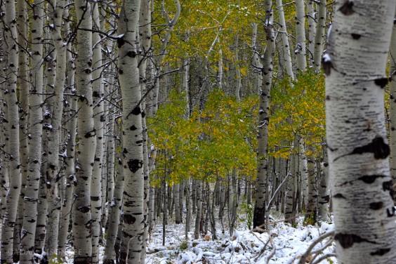 Fall Winter