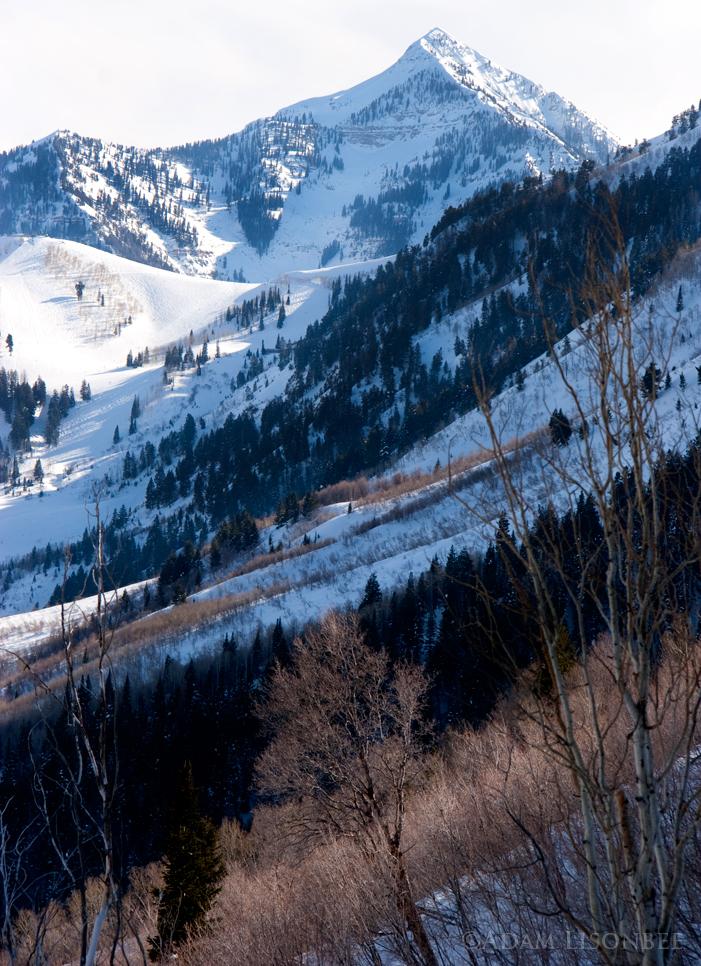 AlpineLoop/Cascade