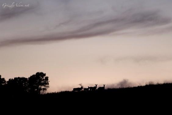 Elk1600