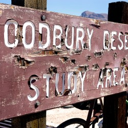 woodbury study area