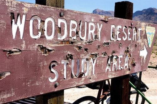 woodbury study area