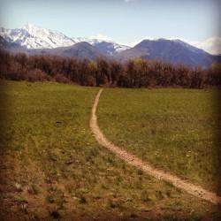 Timp Foothills