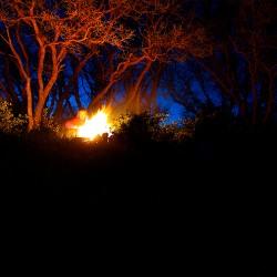Campfire_WEB