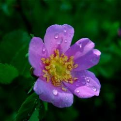 flowerclose