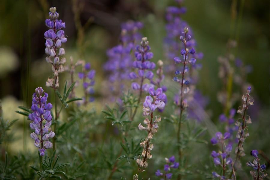 flowersblur
