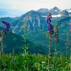 timpflowers